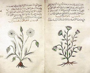 Herbario gráfico del médico Dioscórides
