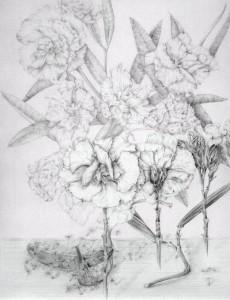 Nerium oleander-Marta Chirino