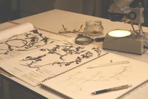 Mesa de trabajo, en el estudio de Marta Chirino
