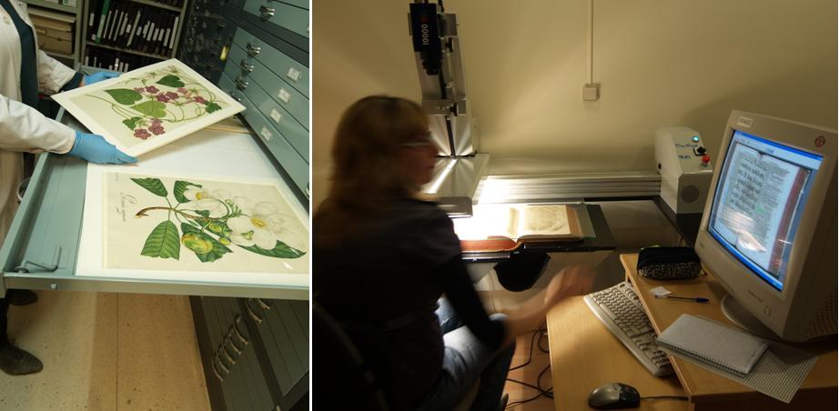 La biblioteca y archivo del real jard n bot nico csic for Biblioteca digital real jardin botanico