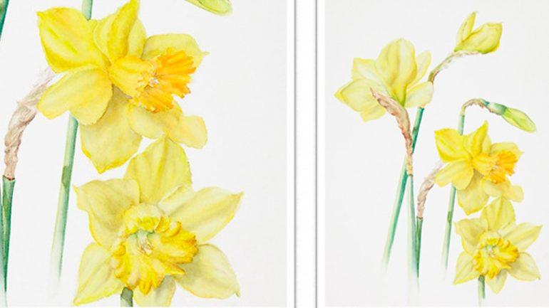 Jenny Coker Botanical Art