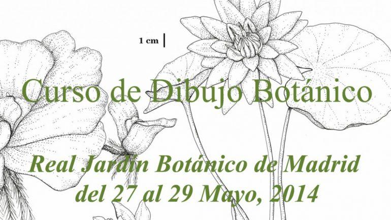 Curso de dibujo Botánico en el Real Jardín Botánico de Madrid