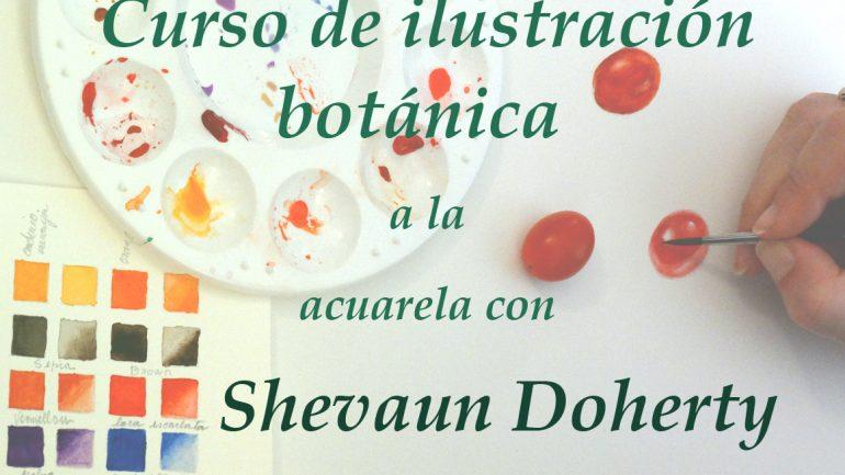 Curso de Ilustración Botánica, Shevaun Doherty