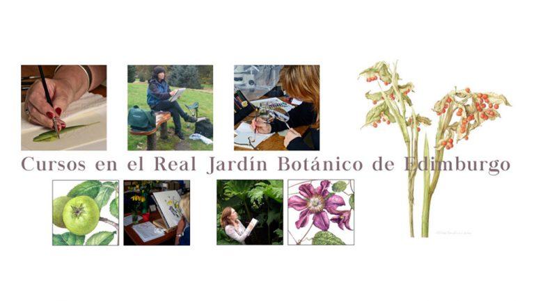 Cursos del RJBE de ilustración botánica